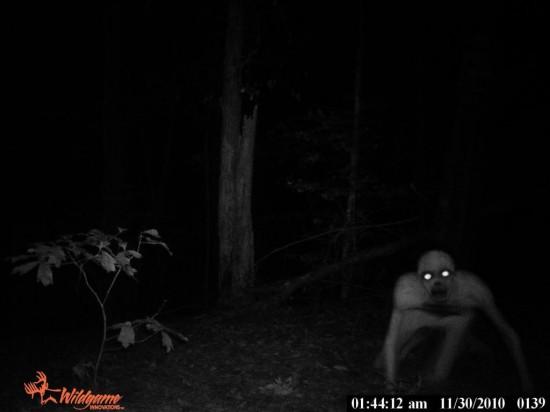 Louisiana Hominid 550x412